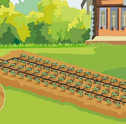 Капельный полив для теплиц  Водомерка ЭКО Всем известный факт, что вода – это источник жизни. Любая сельскохозяйственная культура на 80% состоит из воды и не может развиваться без необходимой влаги. Вода входит в состав не только самого растения, но и его семян и плодов. Поэтому для полноценного роста и развития каждой сельскохозяйственной культуре нужен полив.  К сожалению, необходимый растениям полив часто оказывается изнурительным делом, на которое не всегда хватает сил и времени. А ведь так хочется, чтобы заботливо высаженные растения выросли и принесли богатый урожай!